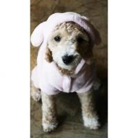 Is Pet Animal costume Hundeoverall pink